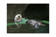 Otter 8X10 0651 (1)