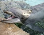 Seaworld Dolphin 8X10 02720042