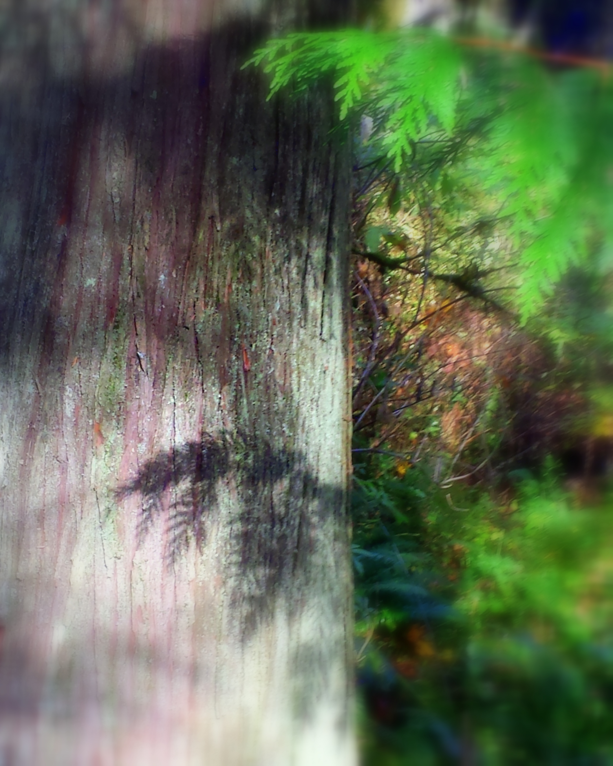 A limb Shadow on Tree trunk.
