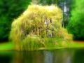 Weeping Willow shining.