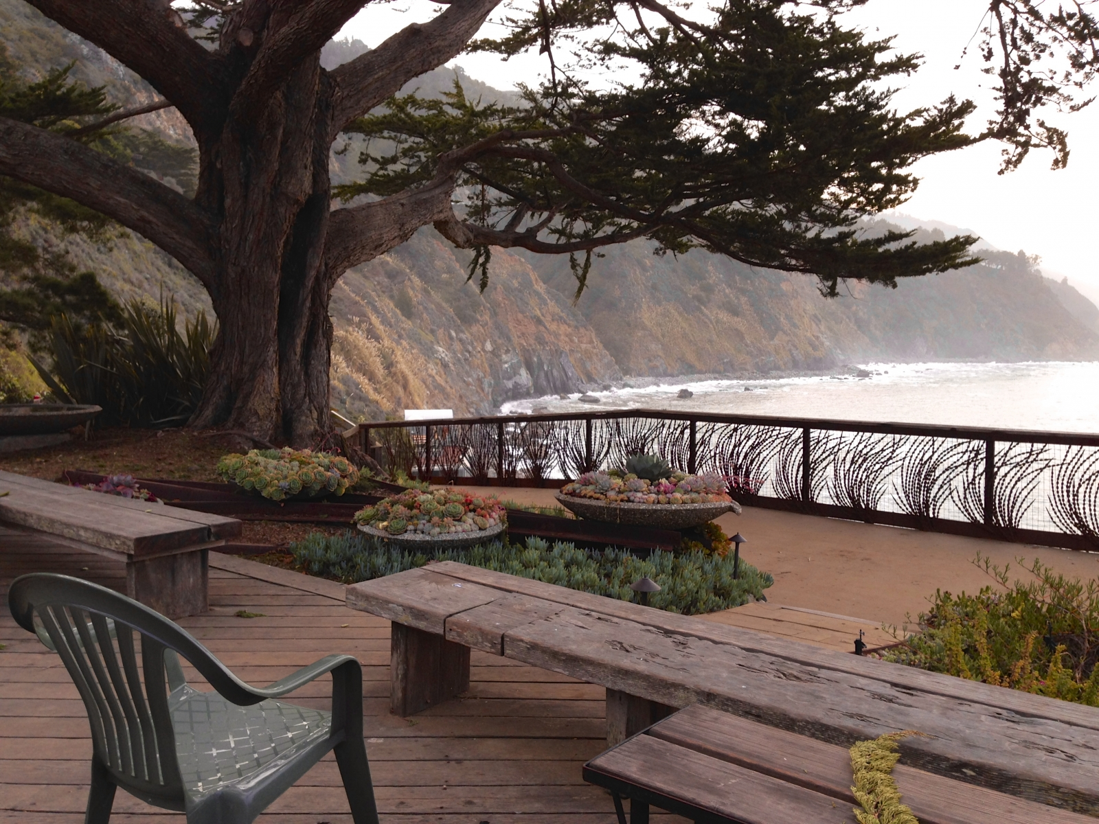 View from Esalen Lodge Deck tree framed.