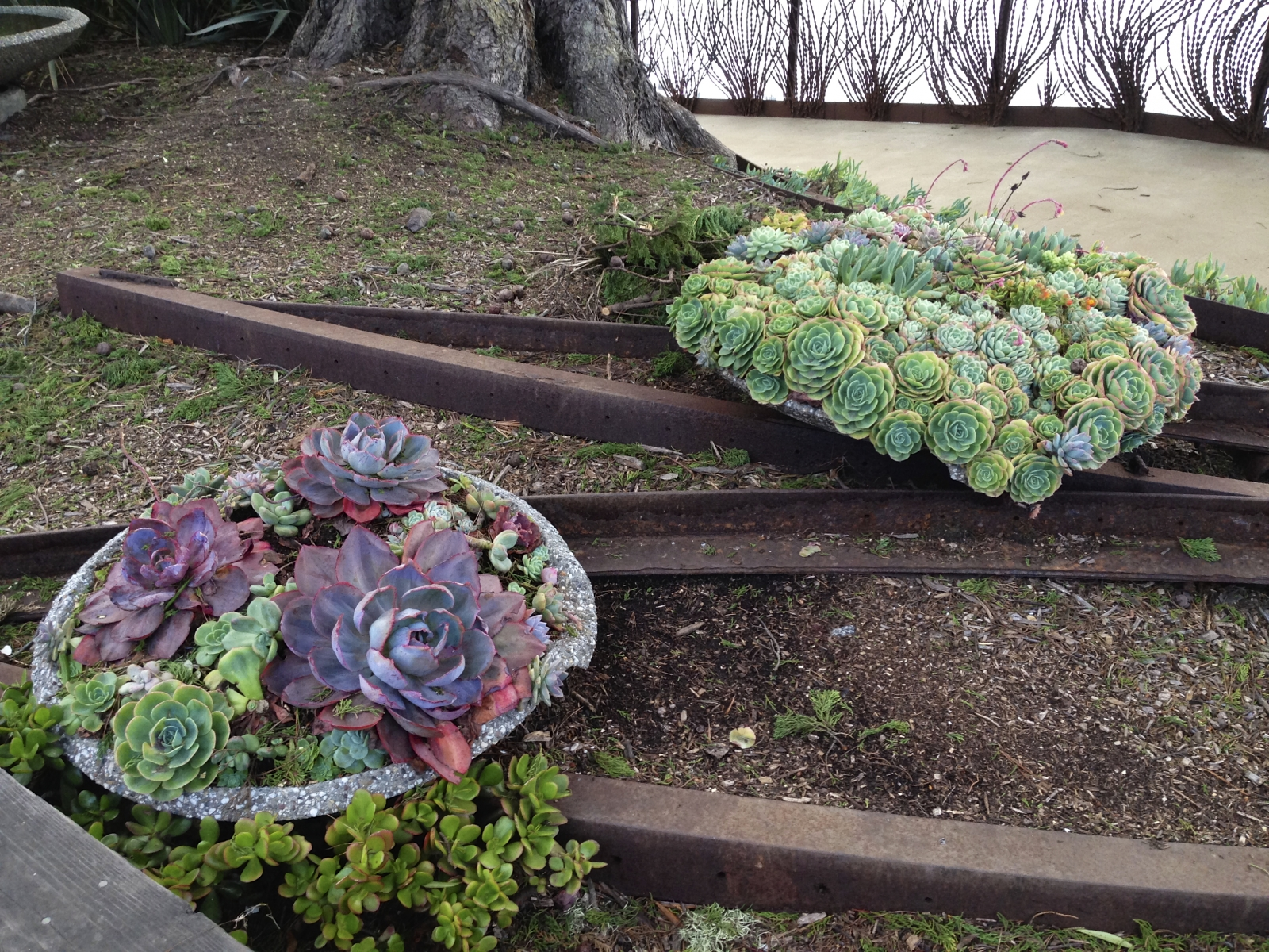 Succulents, rails, tree, art fence, sea 3.