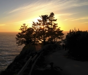 Esalen Gorgeous Pacific sunset through tree.