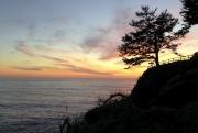 Gorgeous Tree, fallen tree, sunset.