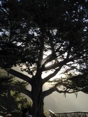 Gorgeous Esalen Sunrise through tree.