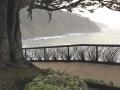 Tree, succulents, rails, sea, windblown grass metal fences.
