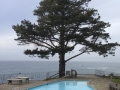 Esalen Swimming Pool and TREE.