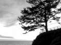 Esalen Tree at Sunset BW
