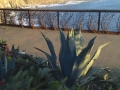 Plants, art fence of plants, sea, sunshine and me.