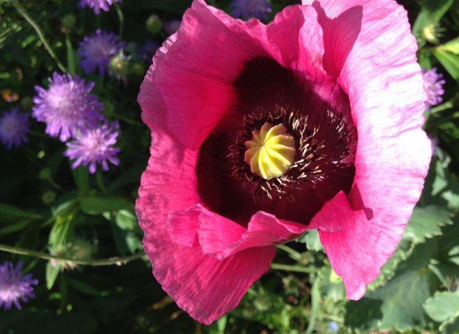 Monet Gardens Red Flower-3