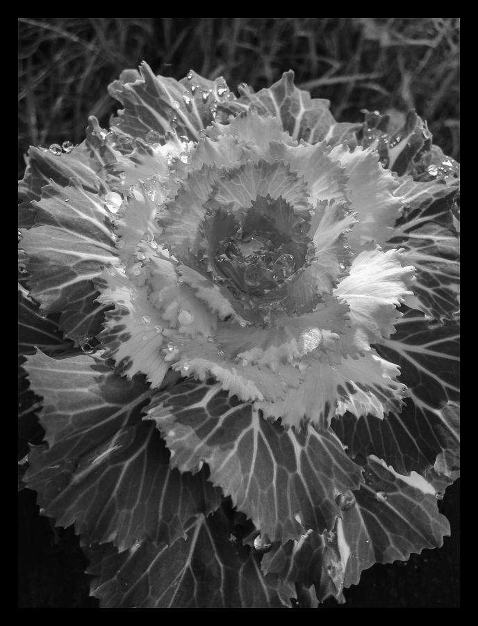 Raindrop Flower versions (5 of 9)
